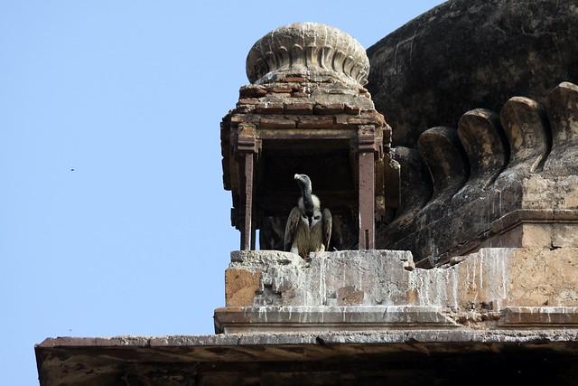 orcha madhya pradesh
