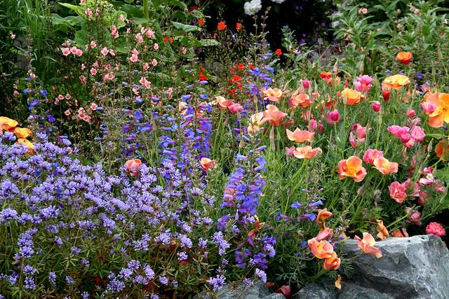 ... Cal Pops 'Apricot & Rose Chiffon'   Flickr - Photo Sharing Apricot