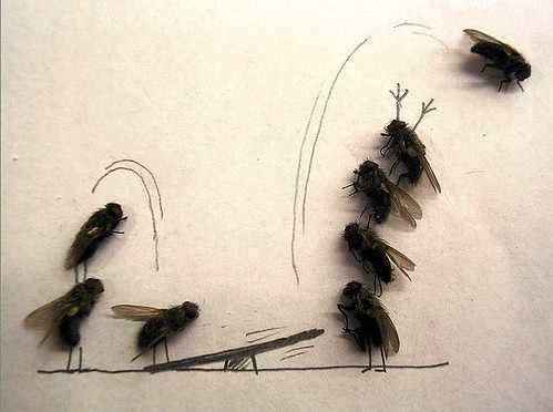 bored at work - fun with dead flies 05