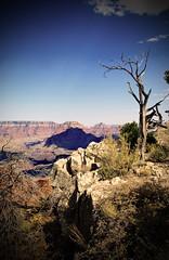 Canyon Mood