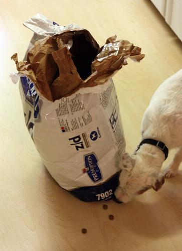 Dog Eat Dog Food