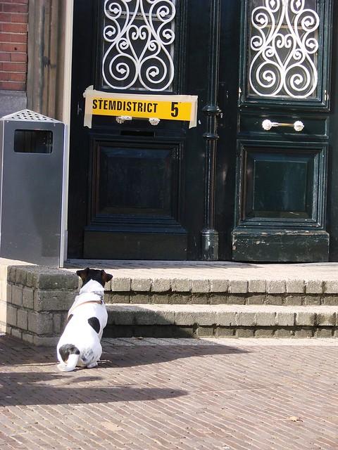 Brave Hond [Day 62/365]