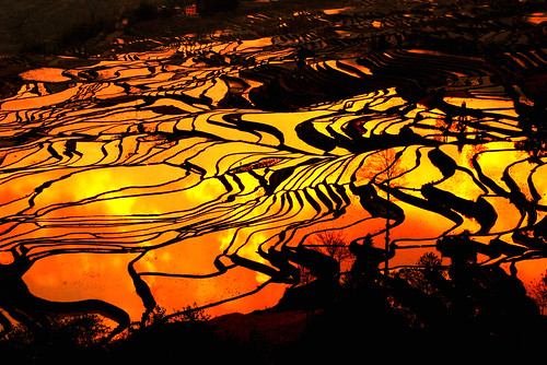 world china heritage nature sunrise landscapes asia unesco yunnan paddyfield worldheritage yuanyang