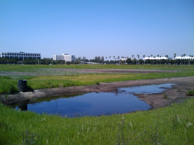 Drying Office Park Pond