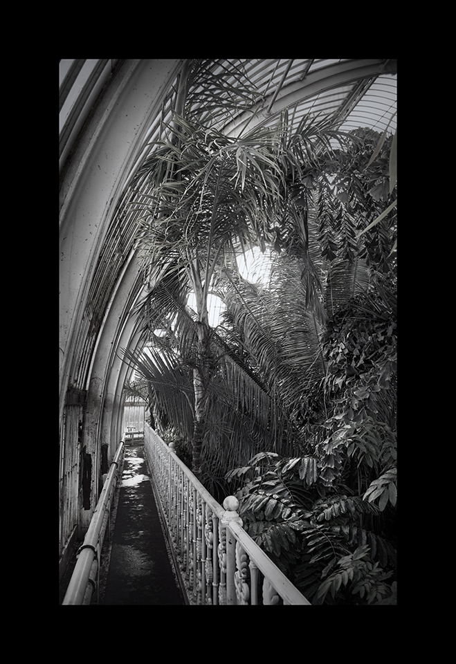 Photography: Palm House by Nicholas M Vivian