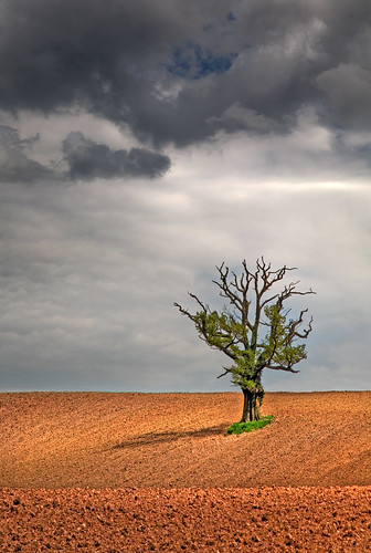 uk sky sun tree field wales canon landscape eos britain cymru cardiff explore caerdydd lone 5d lonely agriculture hdr plough wfc ploughed druidstone canoneos5d explored wentloog welshflickrcymru treesubject stevegarrington