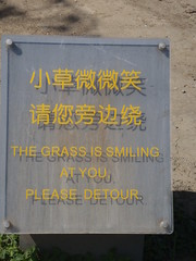 The friendliest grass in China