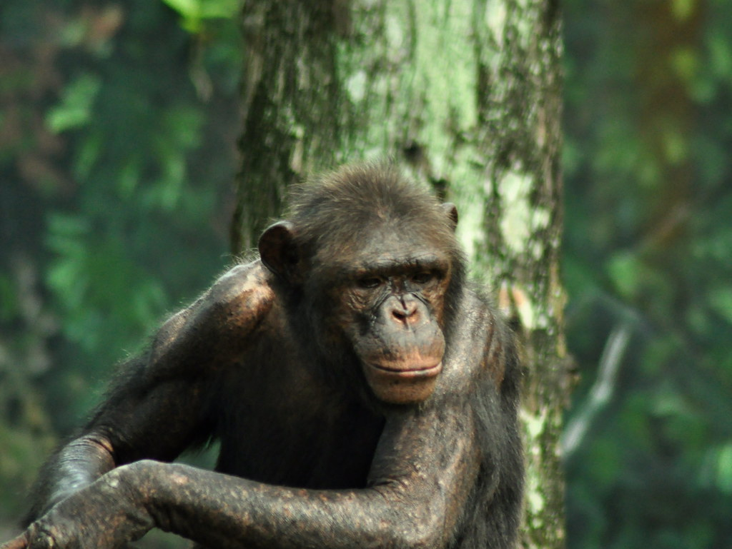 I am serious, no monkeying around today 我是认真的,请不要胡闹 ...