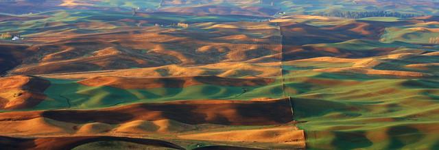 Early fields, Palouse