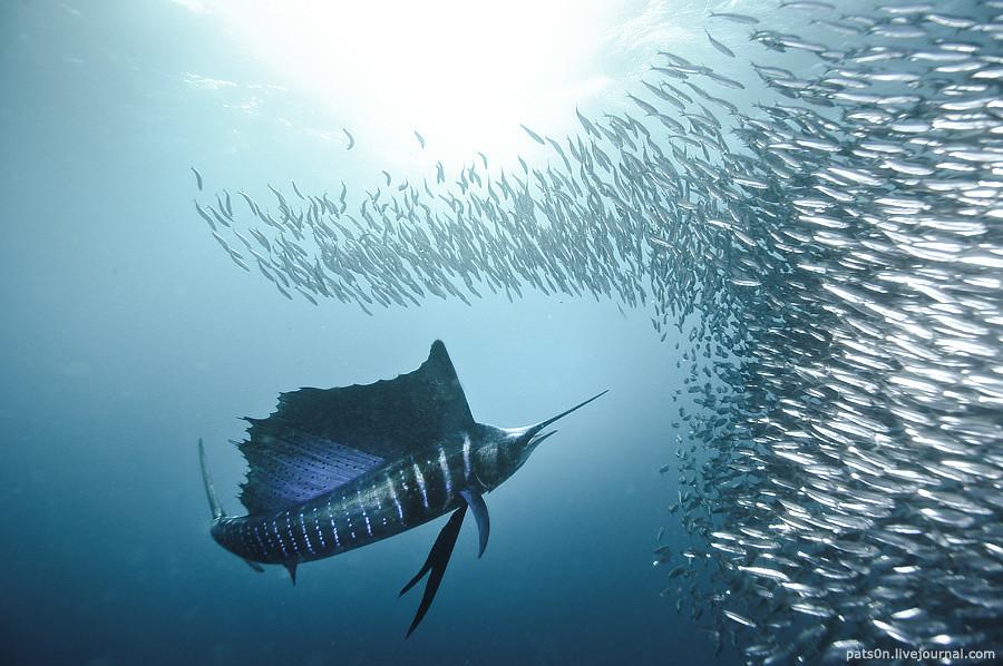 the sardine run #42