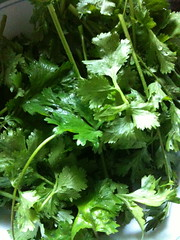brassica(0.0), apiales(0.0), brassica rapa(0.0), plant(0.0), produce(0.0), rapini(0.0), vegetable(1.0), herb(1.0), food(1.0), coriander(1.0),