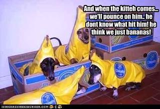 doggies dressed up as bananas