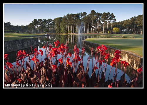 red orange lake green water fountain ga golf georgia pond lily greens link lillies fairway canna cannas johnscreek atlantaathleticclub
