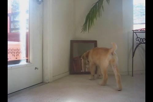 ViVi & The Mirror - Part 2