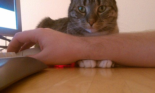 Doxy cares about my ergonomics