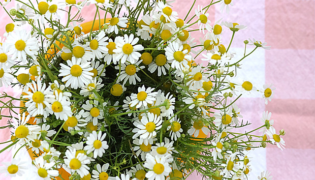Don't you think that daisies are the friendliest flower?