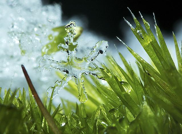 Snow Flake por David Dupplaw