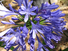 vegetable(0.0), hyacinth(0.0), chicory(0.0), flower(1.0), plant(1.0), macro photography(1.0), herb(1.0), wildflower(1.0), flora(1.0), scilla(1.0), petal(1.0),