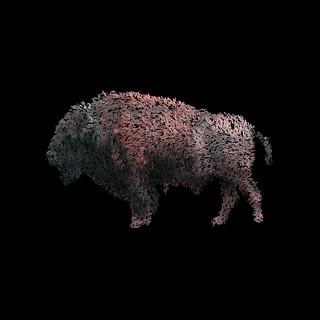 bison10