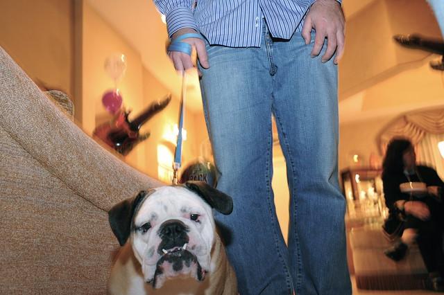 Trainer Dog Food