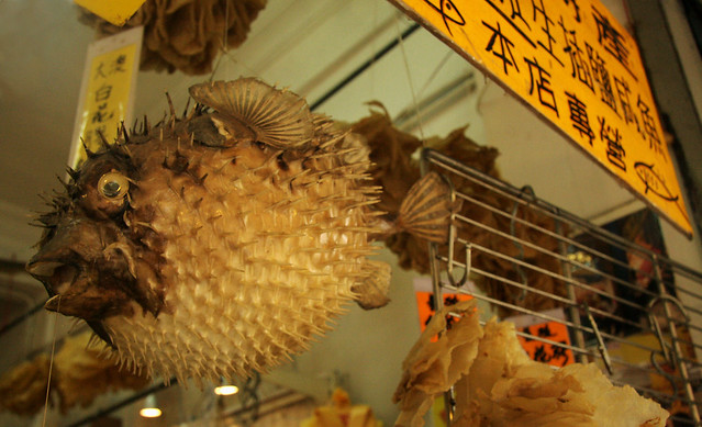 Large dried puffer fish for sale in medicinal stall lama for Puffer fish for sale