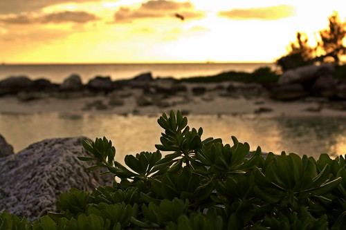ocean sunset beach canon silver island rebel 50mm view f14 grand atlantic usm freeport channel bahama xsi 450d vanagram mattpbecker mpbecker