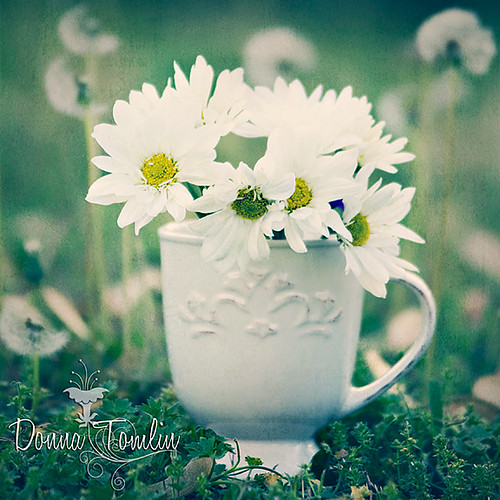 Cup full of Daisy's