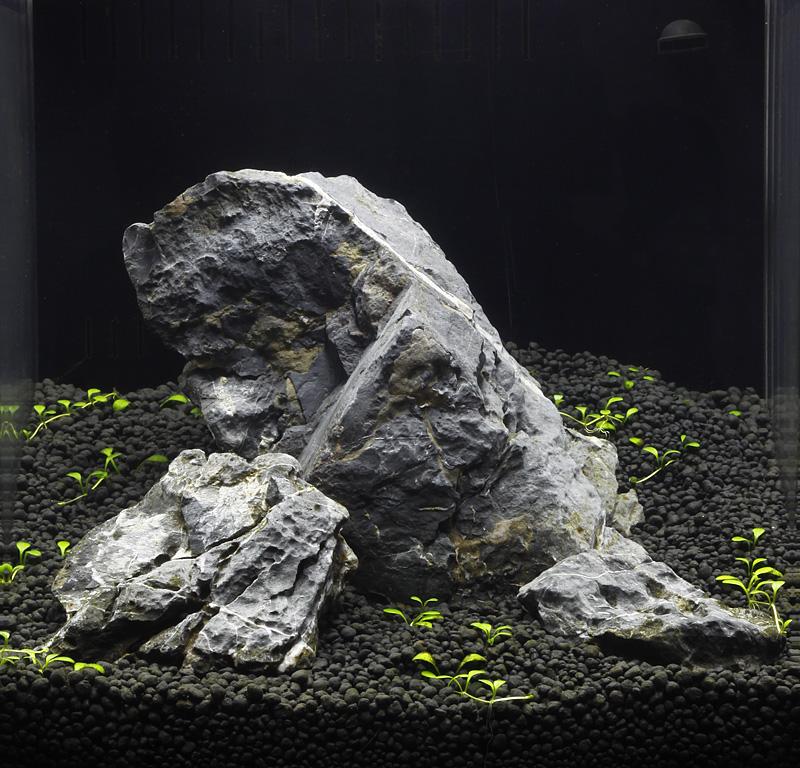 Nano sanzonia journals aquatic plant central for Rocks for fish tank