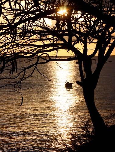travel sunset sea tree water reflections boat tropic caribbean guadalupe flamboyant silhoute frenchwestindies guadaloupe lesserantilles caribbe mywinners platinumheartaward platinumpeaceaward