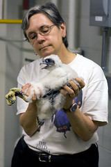 Margaret Holding Gracen the Peregrine