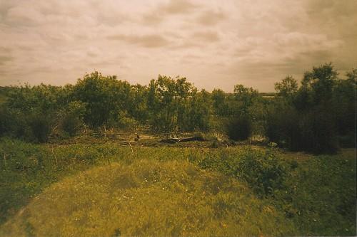 florida alligator gainesville 35mmfilm paynesprairie