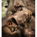 Bali - Ubud Monkey Forest by TOONMAN_blchin
