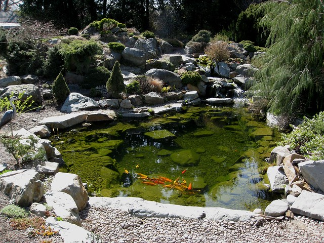Koi pond flickr photo sharing for Koi fish pond care in winter