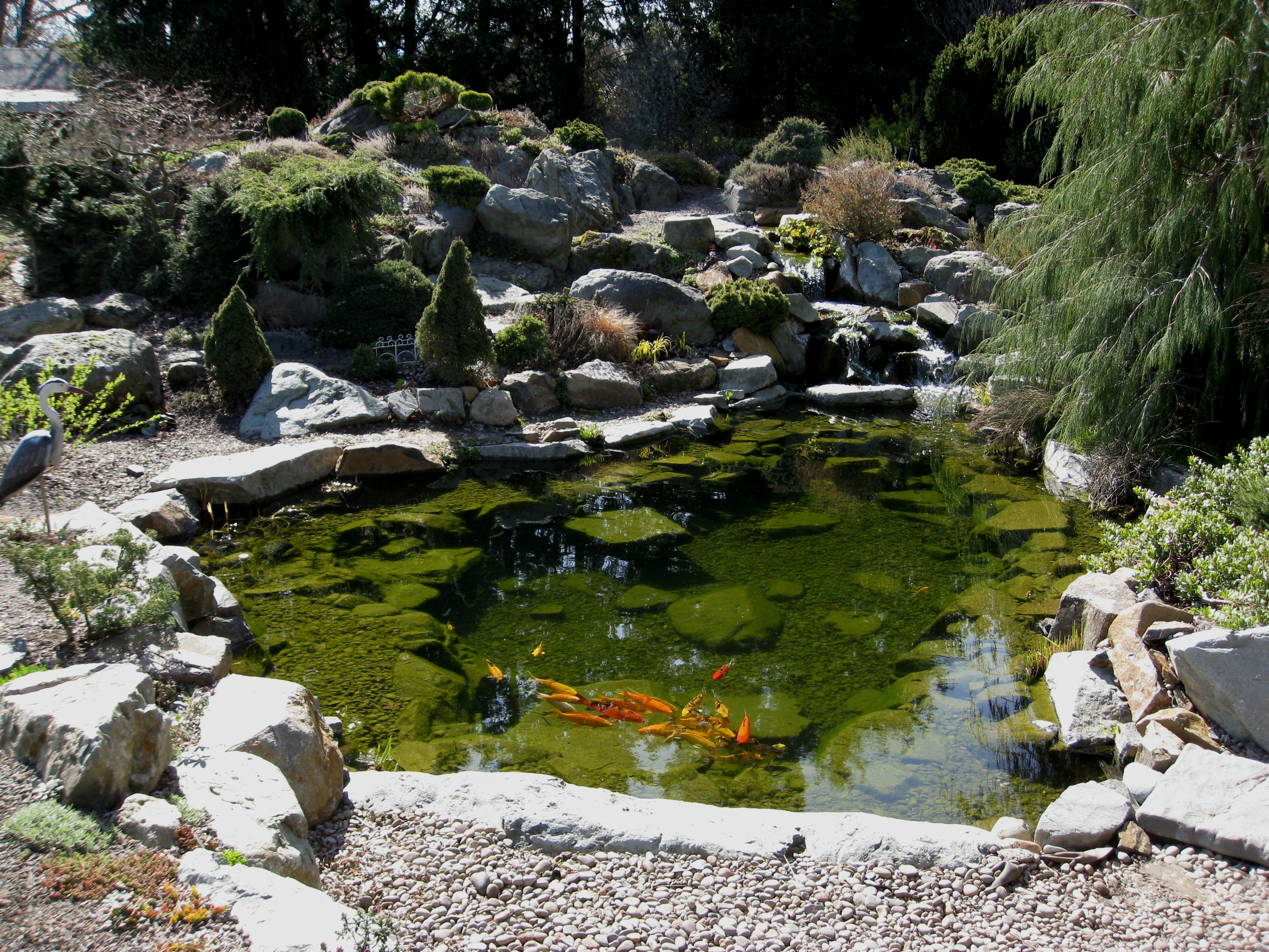 Koi pond flickr photo sharing for Koi fish pond rocks