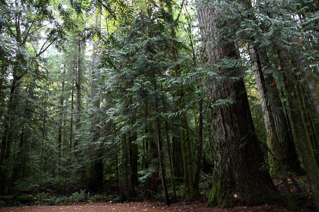 Temperate Forest Biome - a gallery on Flickr