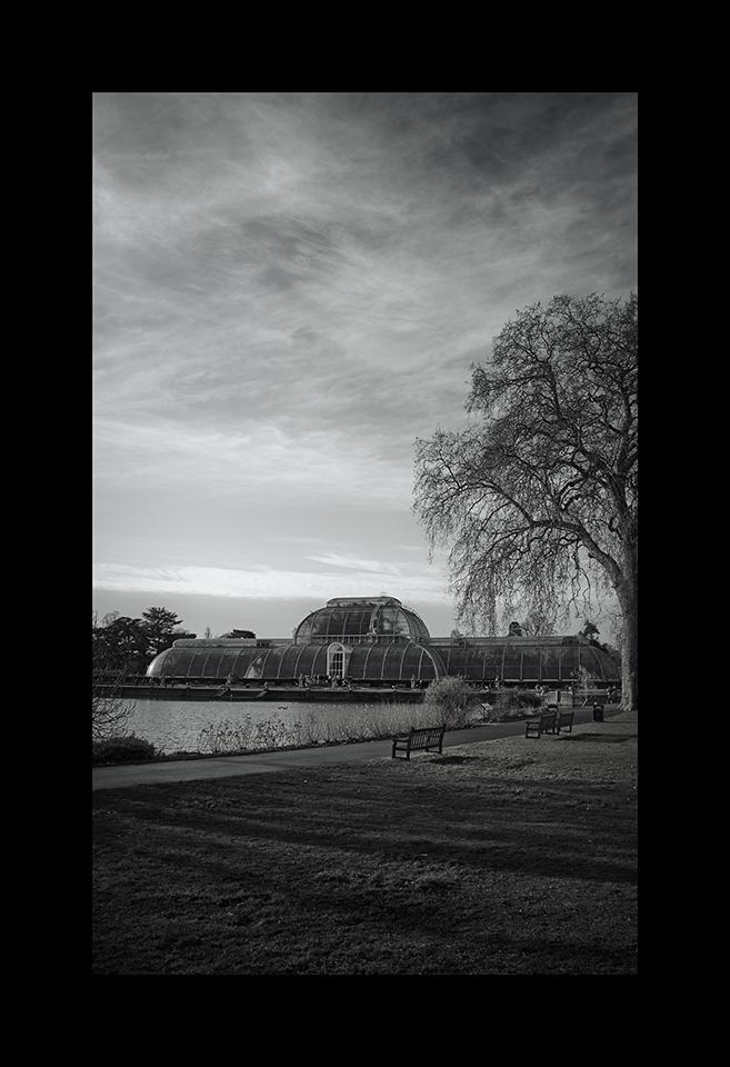 Photography: Palm House by Nicholas M Vivian