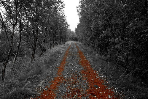 Trail of Red