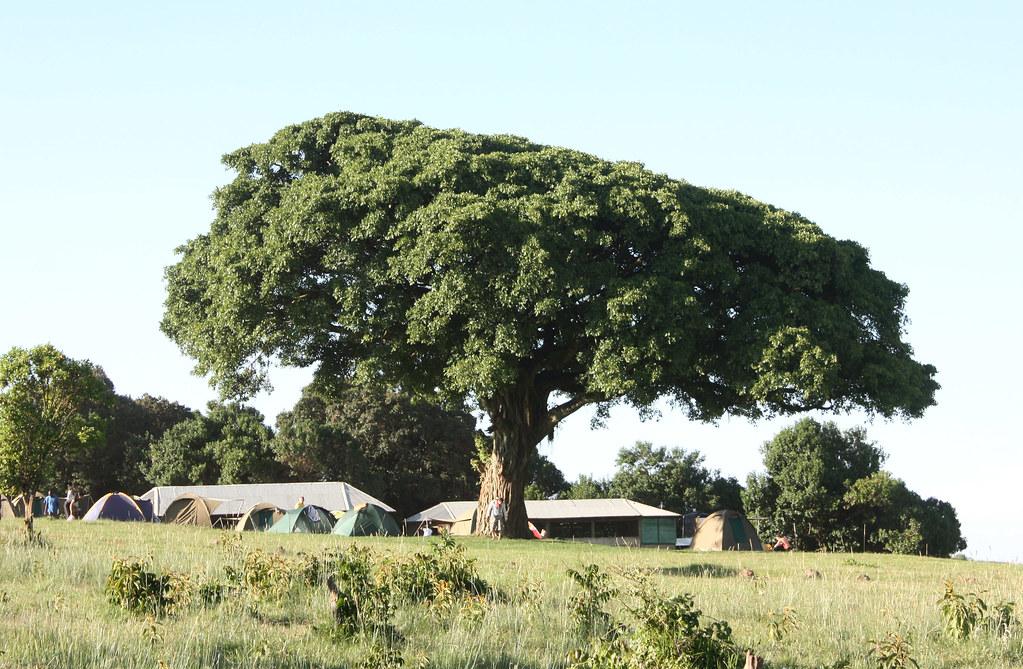 Re: onder n boom