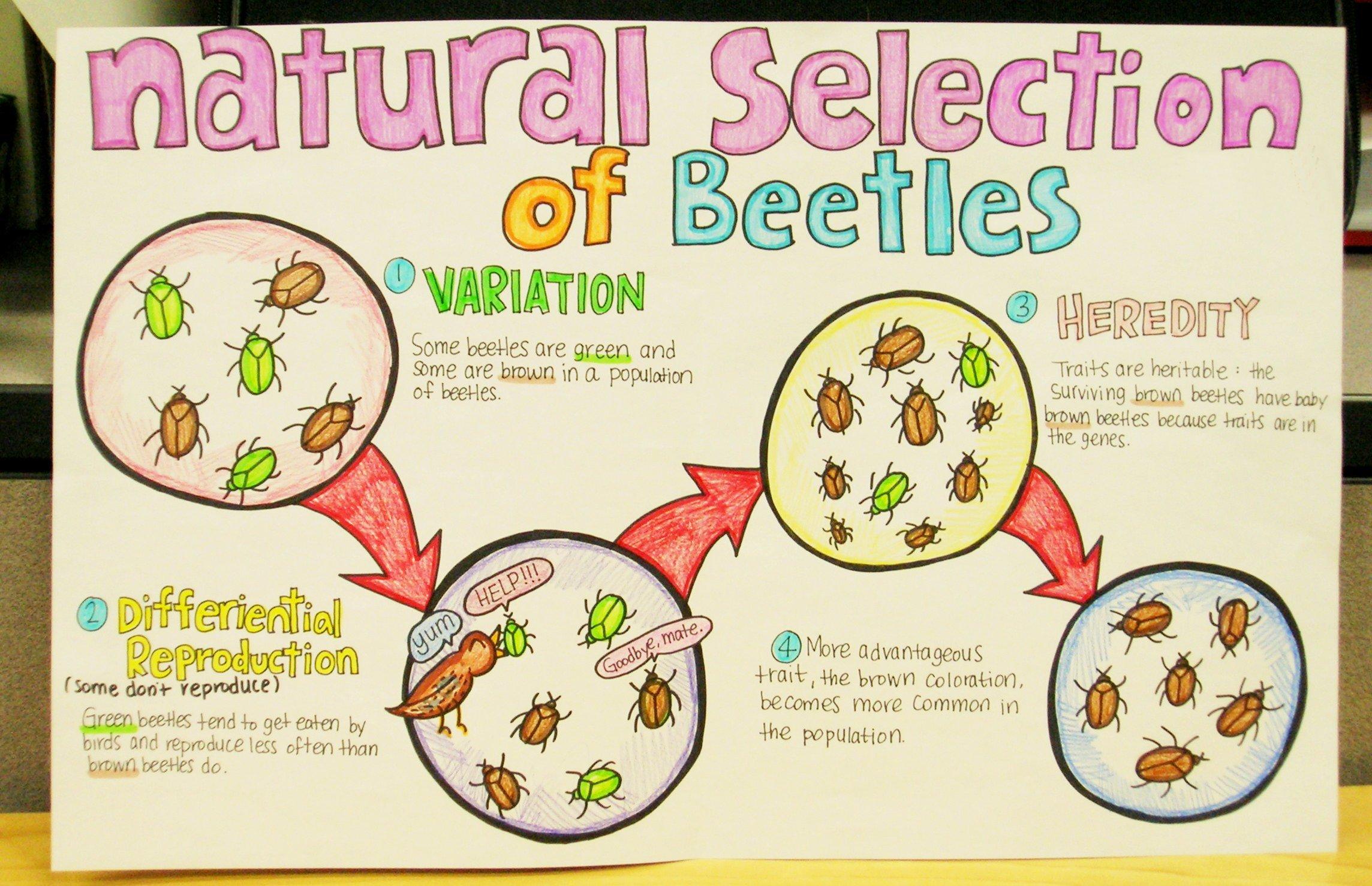 Adaptation and Selection