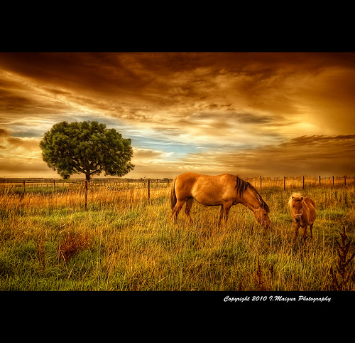 sky horses holland tree nature field landscape golden nikon thenetherlands iván hdr nikond200 southlimburg goldentouch artistictouch ivánmaigua