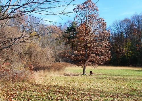 autumn newyork fall nature landscape geotagged brighton hbm corbettsglen corbetts corbettsglennaturepark benchmonday happybenchmonday blm18 blmiers2