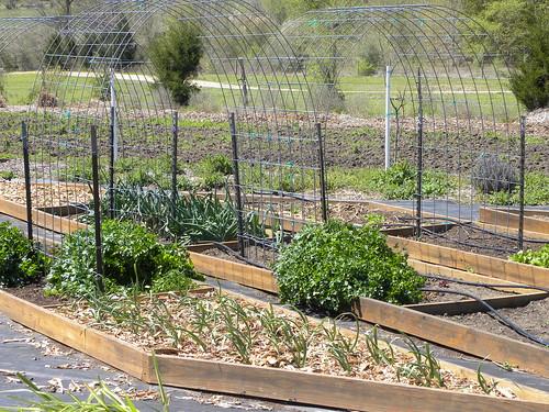 marketday vegetablegarden centraltexas nearbrenham homesweetfarm