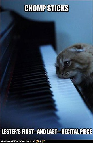 funny-pictures-cat-plays-piano