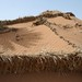 Small photo of Desertification Management