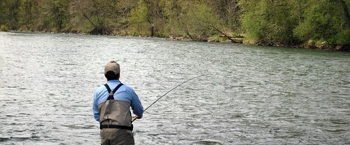 Mckenzie river and willamette river flyfishing report for Mckenzie river fishing report