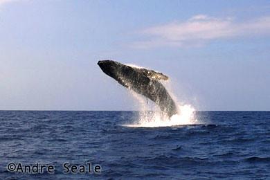 Oceans - whale