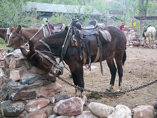 Catching some zzzz's - mule at Phantom Ranch