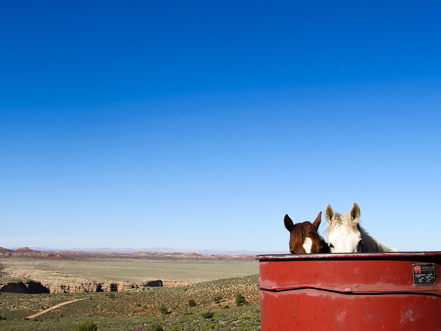 The Little Colorado - Horses