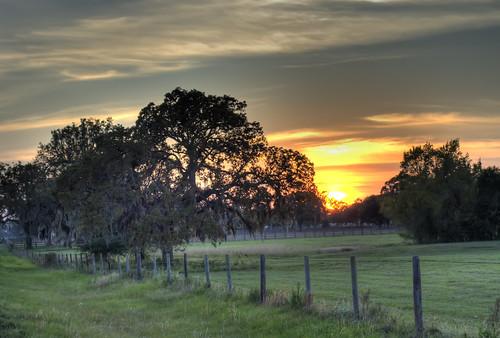 trees sunset sun field rural fence 50mm texas hempstead waller f35
