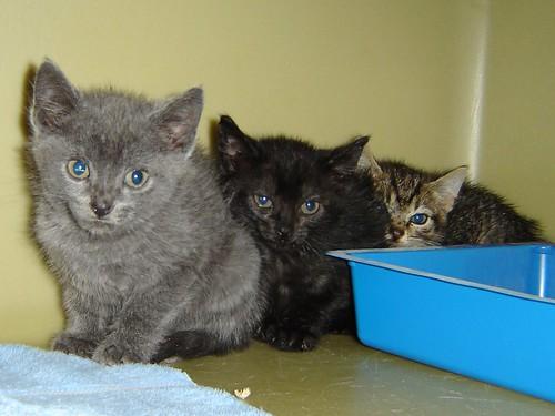 Kitten lineup